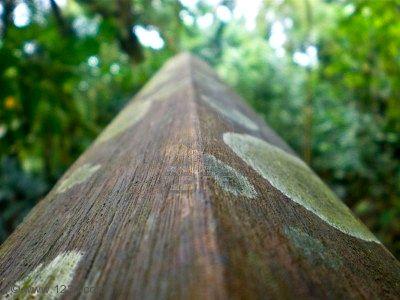 hongos casa madera